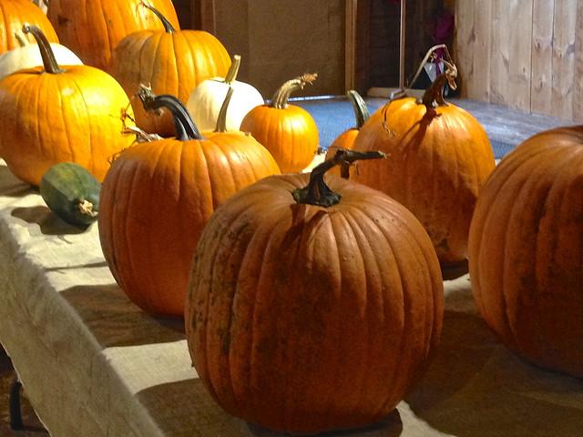 Billings Farm Pumpkins