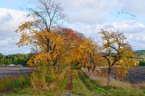 autumn trees sky color fall nature field birds clouds river season landscape scenery sweden path country leafs bessula coth5