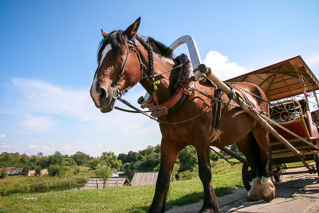 A carriage horse under the blue sky, Suzdal, Russia スズダリ、青空の下で休憩中の馬車馬さん