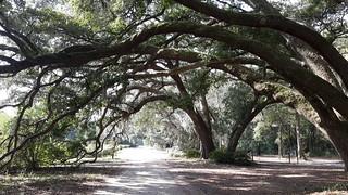 Grand Oaks at the Charleston Tea Plantation