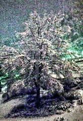 nevicata di notte/ tree , snow at night