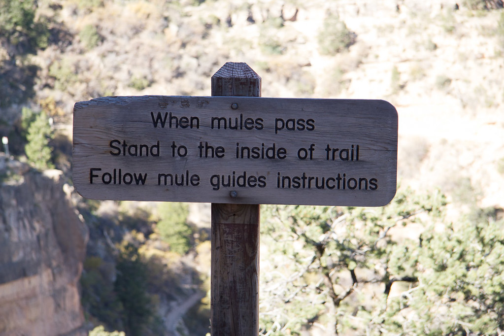 Instructions for what to do if you see a group on mules