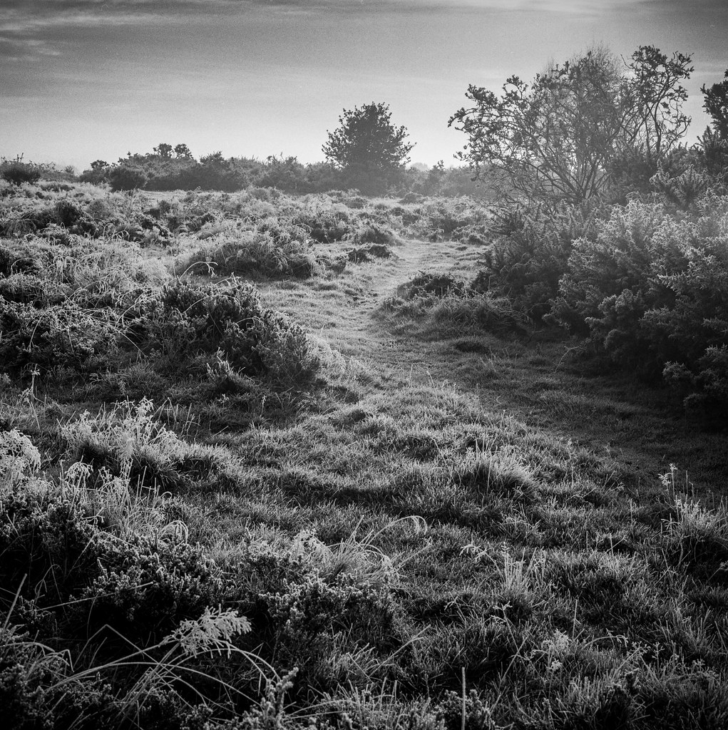 Frost on Heathland.