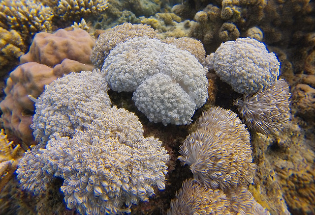 Soft Corals | Moyo Island