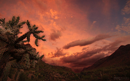 park blue sunset red cactus sky parco usa sun mountain reflection green nature clouds america landscape us tramonto nuvole unitedstates natural natura national cielo np saguaro montagna paesaggio cholla riflesso statiuniti naturale andreamoscato