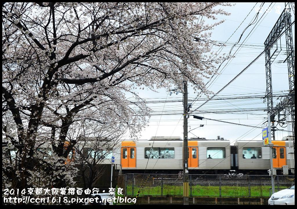 2014京都大阪賞櫻自由行.奈良DSC_0859