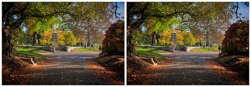 Green-Wood in Autumn 4