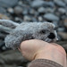 seal pup hand by ladybirddollstudio