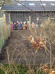 Dagens fugletur for Muslinger. Vi så på høns :-)