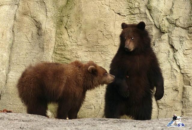 Tierpark Hagenbeck 102