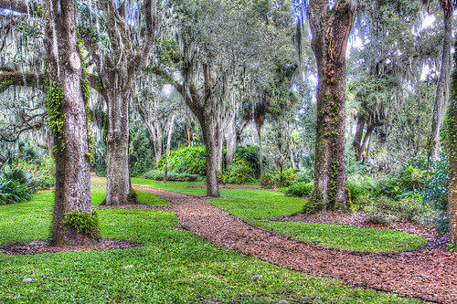 trees canon woods florida path trail hdr eos60d flutterbye216