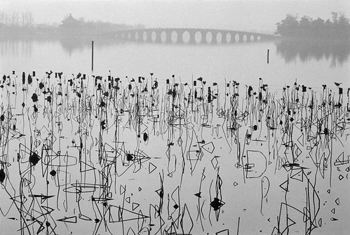 BURRI_CHINA.-Beijing.-1964.-Former-Summer-Palace.-Dead-lotus-flowers-on-the-Kunming-Lake