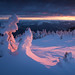 Pink Mummies by DBPhotographe