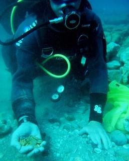 Scuba diver Isreali gold coin hoard