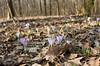 2015-02-19- crochi al boscone LR -2269