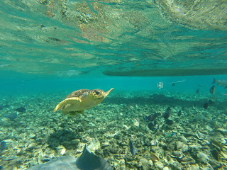 Snorkeling on Caye Caulker, Belize.