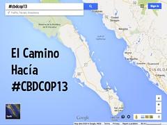 El Camino Hacía #CBDCOP13 @CBDNews