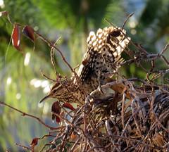 flower(0.0), tree(0.0), food(0.0), snipe(0.0), animal(1.0), branch(1.0), leaf(1.0), macro photography(1.0), bird nest(1.0), fauna(1.0), bird(1.0), wildlife(1.0),