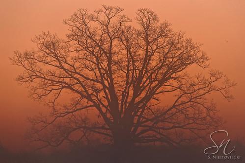 Tremendous Tree 6208-15