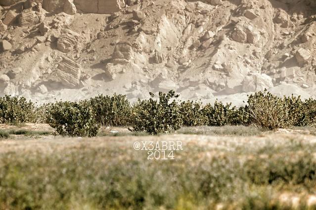 #plant #plants #photo #hdr #colorful #nature #photography #2014 #صورة #غرد_بصورة #روضة_الخفس  #عرب_فوتو #ksa h #photos #pictorial #كاميرا #a57 #Alpha #عدستي زوم  #lens #zoom  #photooftheday  #الرياض #مكشات #تصويري #السعودية  #saudi #Saudi_Arabia #SaudiAr