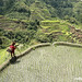 Rice Terraces by Rolly Magpayo