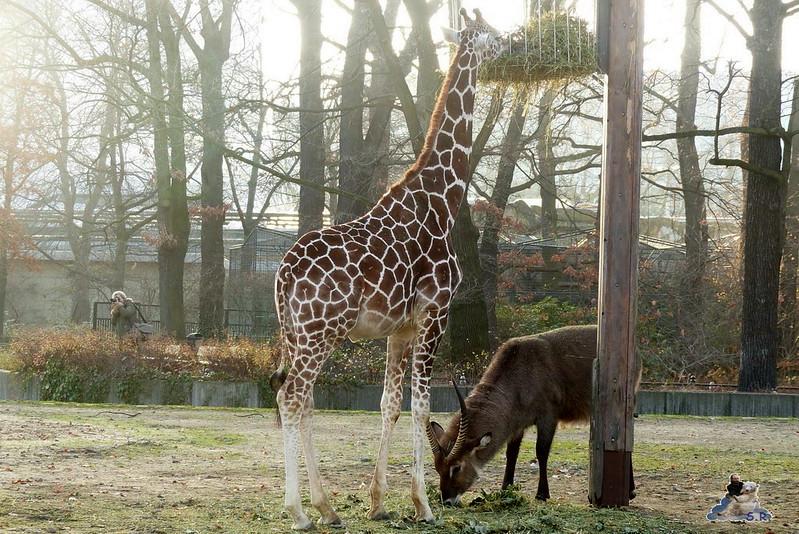 Zoo Berlin 07.12.2014 47
