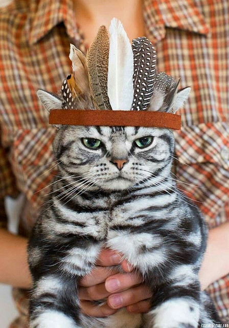 thanksgiving_cat