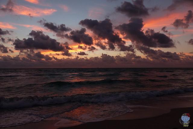 Miami  November 2014 8