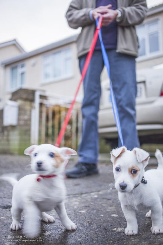 Puppies at Howth, Dublin, Ireland