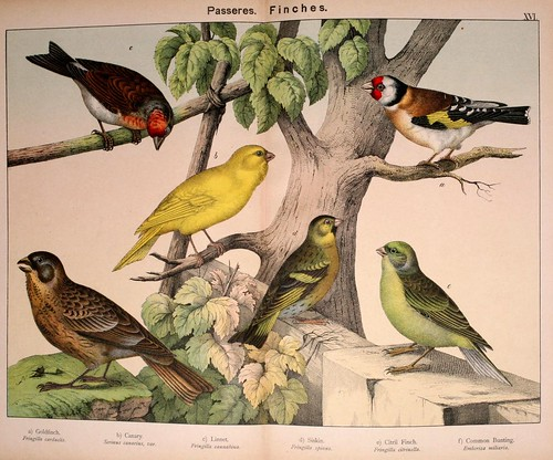 010-Natural history of the animal kingdom for the use of young people..- 1889-William Forsell Kirby