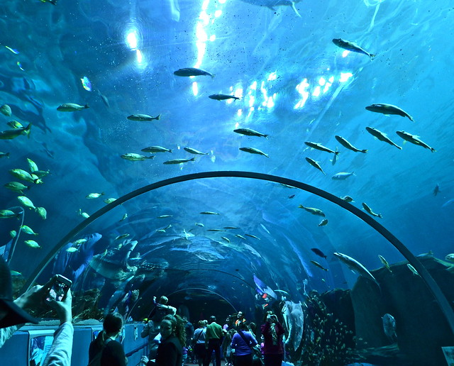 atlanta georgia aquarium - largest aquarium in the world