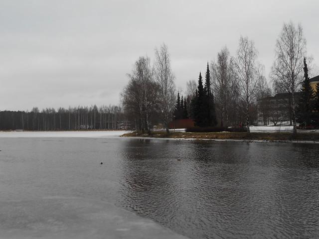 Poikkeuksellisen aikaista järvijäiden sulamista Hämeenlinnassa B 28.2.2015