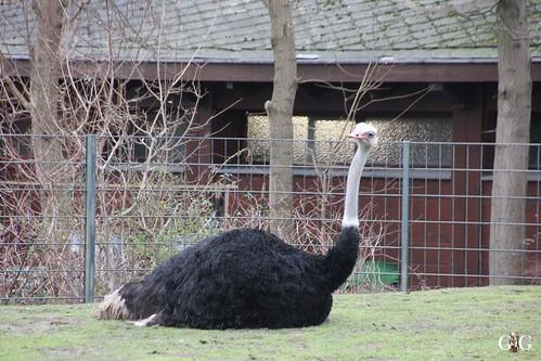 Zoo Berlin 11.01.2015 39