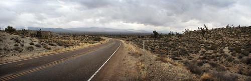 Mojave Desert after the rain