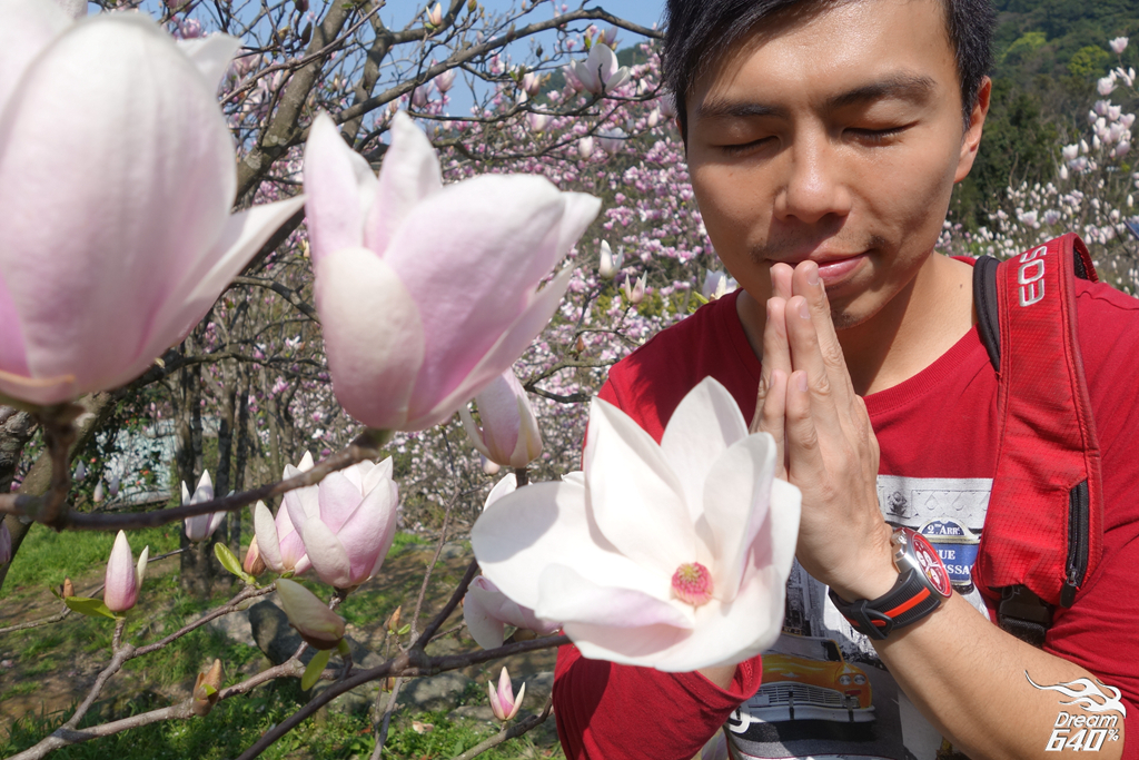 2015楓樹湖木蓮花08