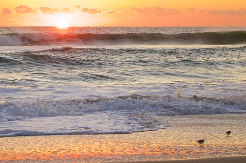 ocean beach birds sunrise dawn surf florida sandpiper indialantic