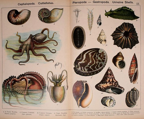 017-Natural history of the animal kingdom for the use of young people..- 1889-William Forsell Kirby