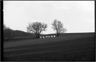 Glashagen von Thomas und Marina/ Konica Autoreflex T3 / Konica Hexanon AR 50 mm / F1,4 /