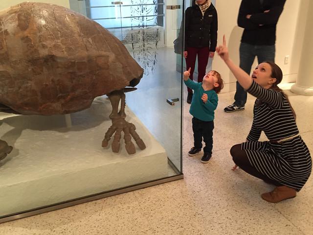 Dinosaur Bones at AMNH