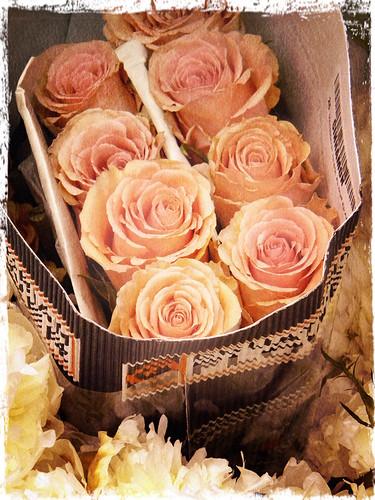 Melon-Colored Roses in Pixlromatic