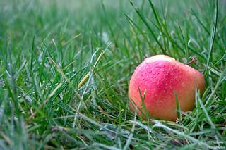 The solitude apple