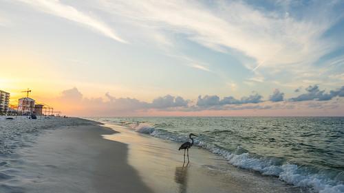 ocean travel sky orange seascape color detail bird beach water colors beautiful clouds sunrise us sand view unitedstates florida peaceful oceanview impressive pensacola perdidokey