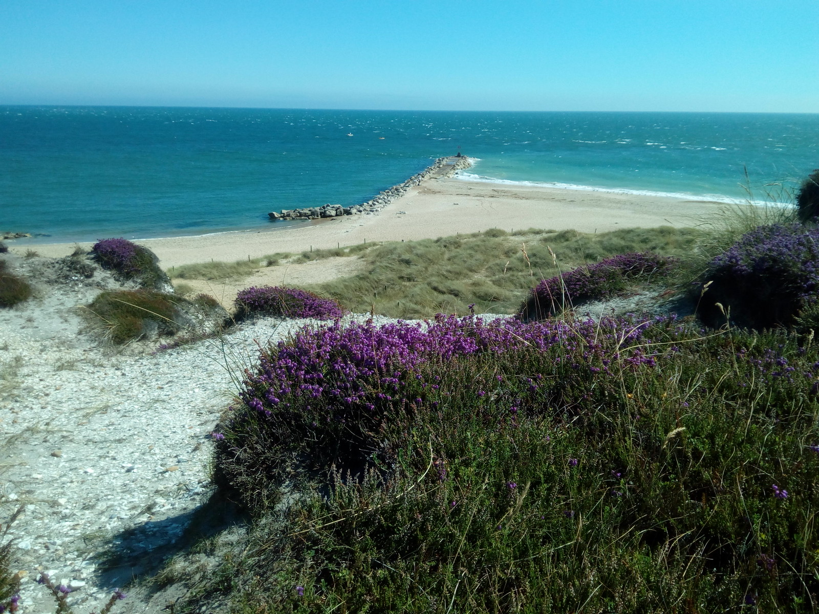 Heather Hengistbury Head