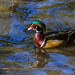 Wood Duck, High Park by (nature_photonutt) Sue