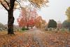 fall  landscapes-9