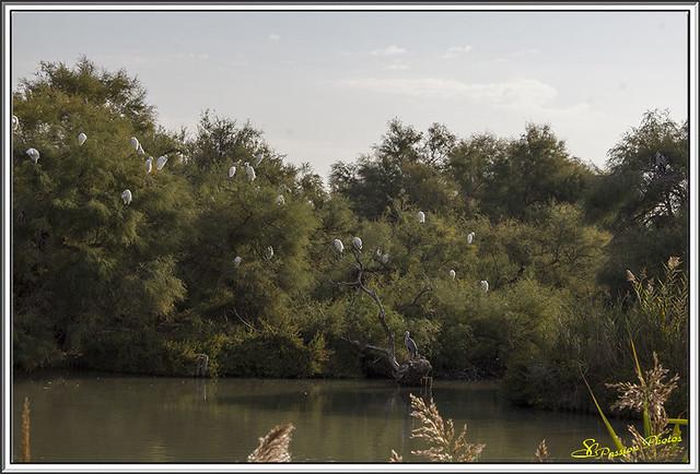 Parc du pont de Gau (1)