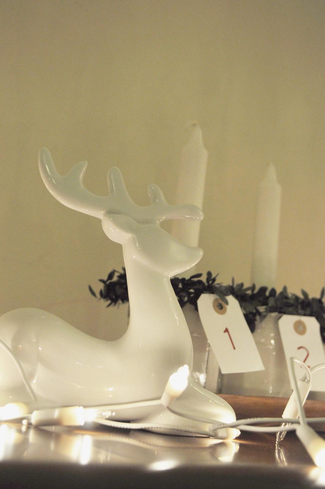 reindeer (7)