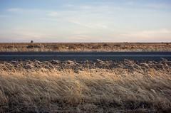 Hay Plain