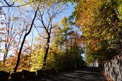 日, 2014-10-26 09:29 - Henry Hudson Drve沿いの紅葉