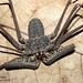Arachnids - Photo (c) Stuart Longhorn, some rights reserved (CC BY-NC-ND)